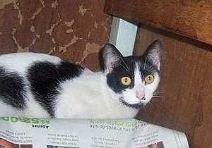 gato2007.jpg