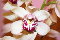 orquideaexp.jpg