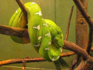 snake_1.jpg